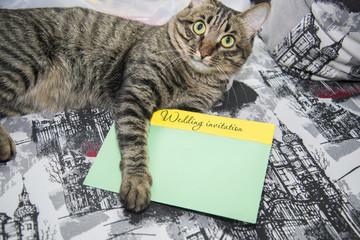 Tabby cat gives the wedding invitation.