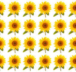 pattern flower sunflower  summertime