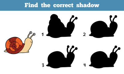 Find the correct shadow (snail)