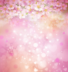 Blossoming sakura tree, floral, spring, bokeh background.