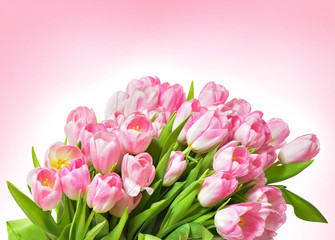 Spring Tulip Flowers over white. Tulips bunch. Pink tulips.