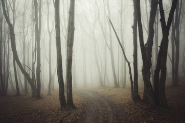 forest path with fog