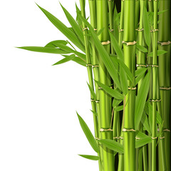 Green bamboo stems with leaves - grove background