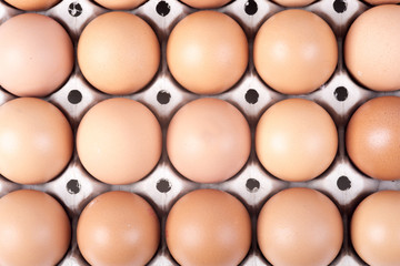 chicken eggs in a container