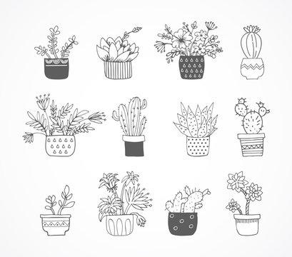 Cute hand drawn sketch, doodle cactus set
