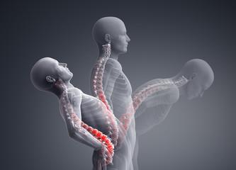 spine motion