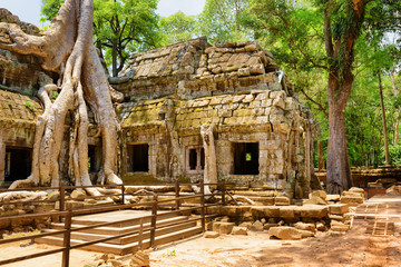 Wall Mural - Ta Prohm temple has been swallowed by jungle in Angkor, Cambodia
