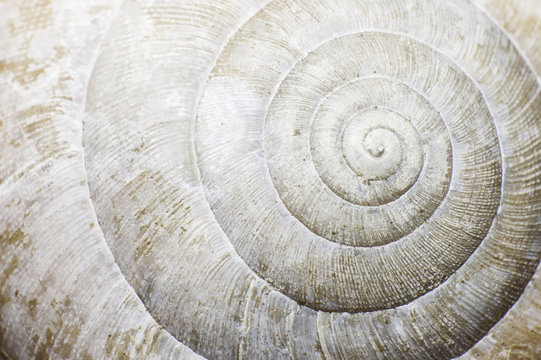 Macro of a snail shell