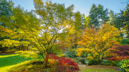 Washington park arboretum, Autumn