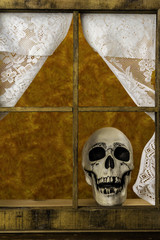 human skull looking out wood frame window with lace curtains with orange background