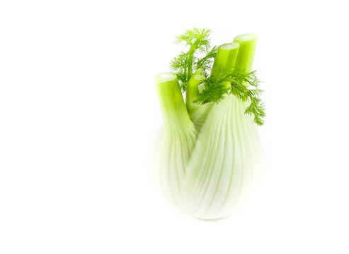 Fresh, organic fennel isolated on white background