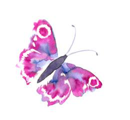 낭만적 수채화 기법과 나비날개의 아름다움