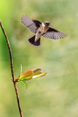 Bird in flight against spring background