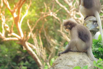 Cute monkey lives in a natural forest of Thailand. Selective focus. Vintage tone.
