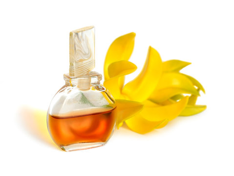 Ylang-Ylang essential oil with flowers.