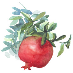Pomegranate fruit watercolor illustration