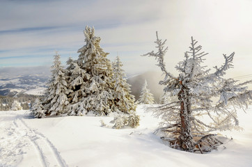Landscape of the mountain Kopaonik in the winter, Serbia