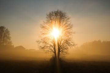 Der Baum der Erkenntnis