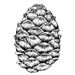 Fir-cone vector sketch in woodcut style