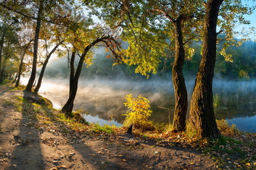 Wall Murals Khaki The autumn wood on the river bank
