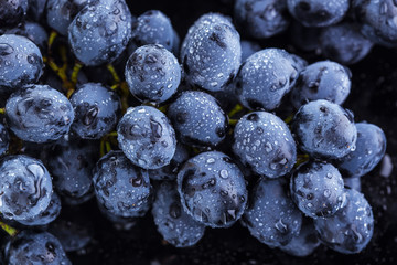 Ripe bunch of  blue grapes closeup with shining water drops Fototapete