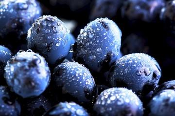 Ripe bunch of  blue grapes closeup with shining water drops