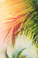 Leaves of Palm Trees in Sun Light. for Holiday Travel Card