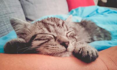 süßes Kätzchen mit Besitzer / Kitty
