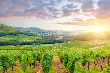 Panorama of vineyards in Burgundy. France