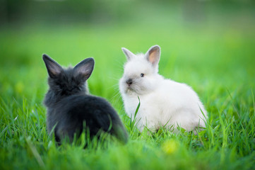 Little rabbits sitting outdoors in summer