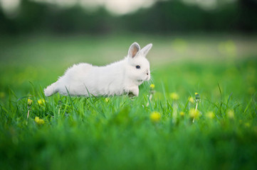 Little funny rabbit running on the field in summer Wall mural