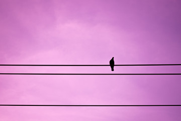 Silhouette pigeon on electric wire