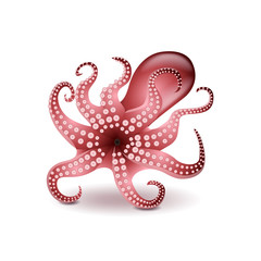Octopus isolated on white vector