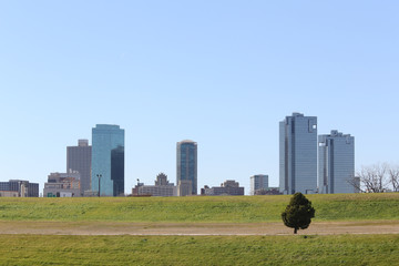 Lone Pine Tree, Fort Worth Texas skyline
