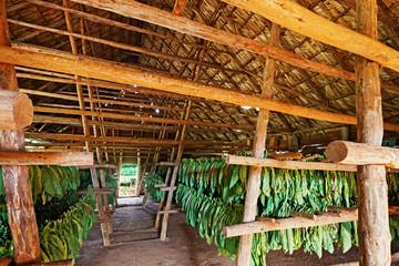 Cuba, Viñales, Tobacco Barn
