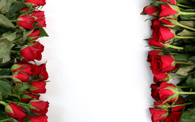 Red roses on a white background.