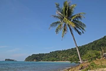 coconut tree,at Koh Chang
