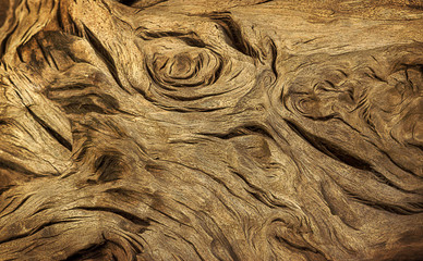the texture of the gnarled tree snag   driftwood tree