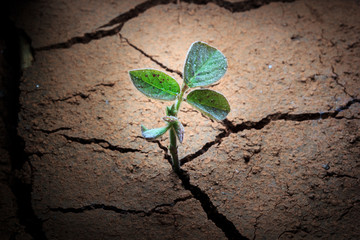 Global Warming,Plant in dried cracked mud.