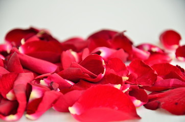 Valentines Day, Red Roses