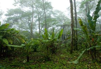 Misty, Dense, Lush Tropical Rain Forest in Costa Rica