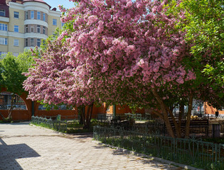 Blooming apple trees in the spring in the zoo park in Yekaterinb