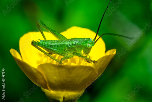 Fiori Gialli A Spiga.Grillo Sul Fiore Giallo Stock Photo And Royalty Free Images On