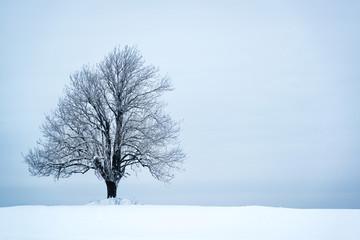 Lonely tree in winter landscape tree in winter landscape