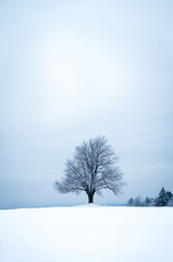 Lonely tree in winter landscape tree in winter landscape
