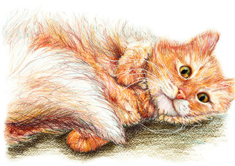 Cute nice ginger fluffy cat hand drawn art