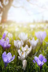 Obraz Wiosenne kwiaty na słonecznym polu - fototapety do salonu