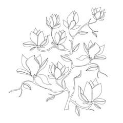 Flowering Branch of Magnolia on white background vector illustration