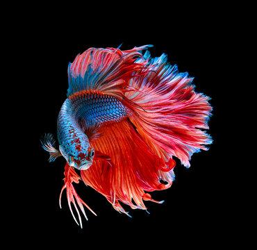 macro .battle fish