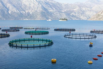 Fish farm in the Bay of Kotor.